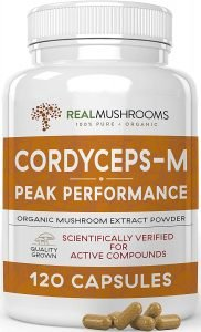 The 5 Best Mushroom Extracts for Cognitive Performance 14