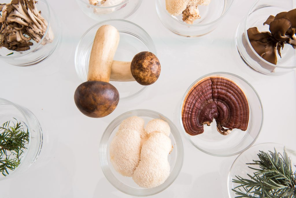 The 5 Best Mushroom Extracts for Cognitive Performance 13